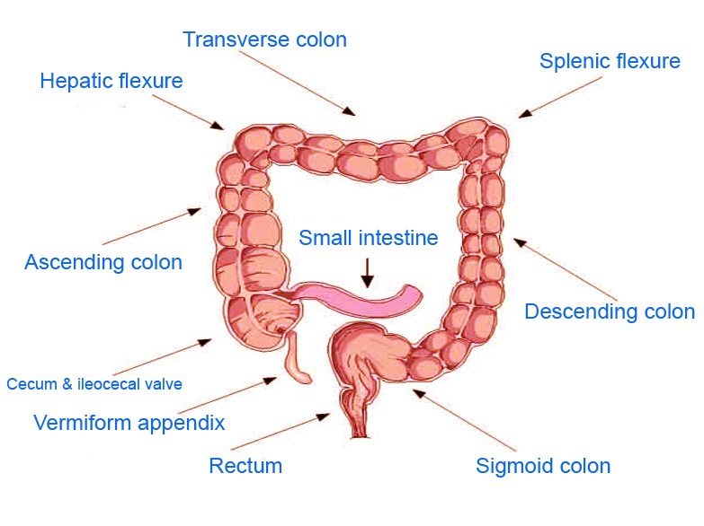 splenic flexure